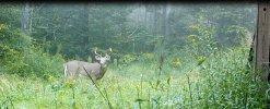 Camp buck.jpg