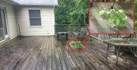 deck tree.jpg